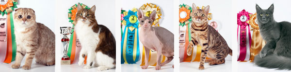 Cat show, club of cat fanciers 'Moscow'